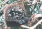 Problemas fitosanitarios en los manglares