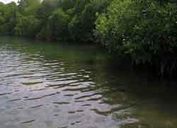 Protocolo Indicador Condición Tendencia Bosques de Manglar (ICTBM)