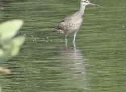 Protocolo Indicador Riqueza de aves acuáticas